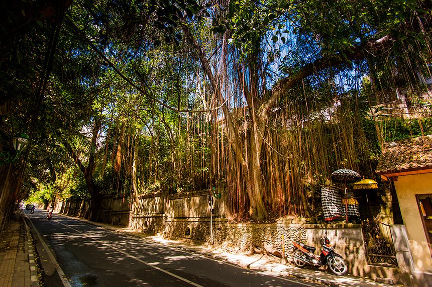 Bali__081