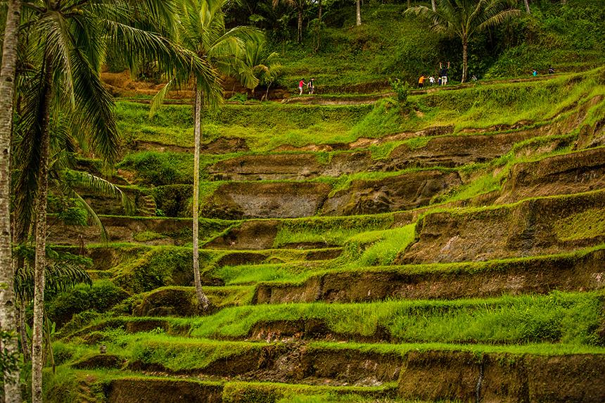 Bali__090