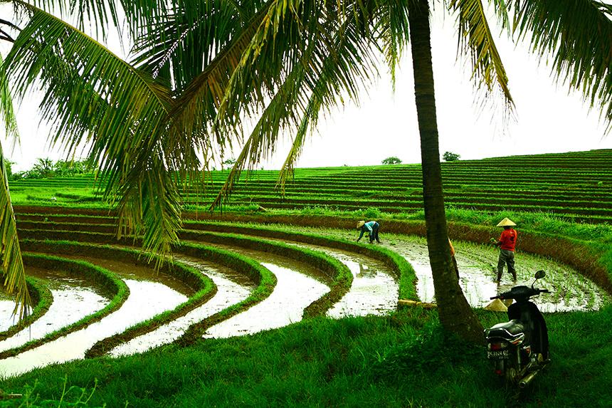 Bali__123