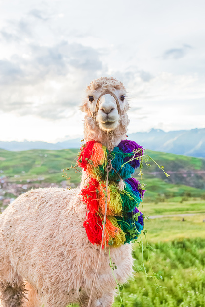 KelliBeePhotography-Peru-Andes-Cusco-0041