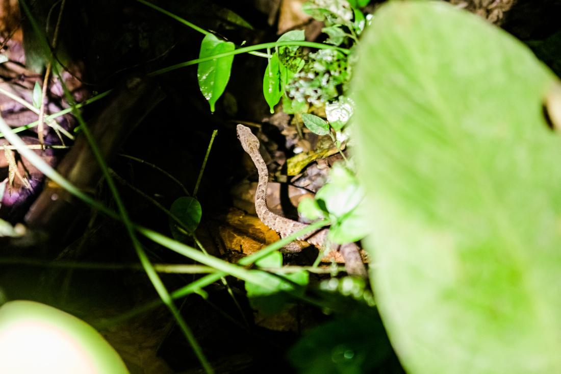 KelliBeePhotography-Peru-Amazon-Day5-0367