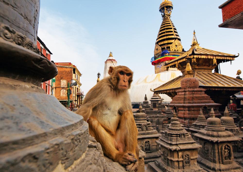 Swayambhunath-a-Monkey-Temple